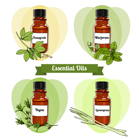 vector set of essential oils. Herbs collection essential oils. Hand-drawn Essential Oils and Natural Supplements. Lemongrass, Thyme, Marjoram, Fenugreek. Vector illustration set - stock vector