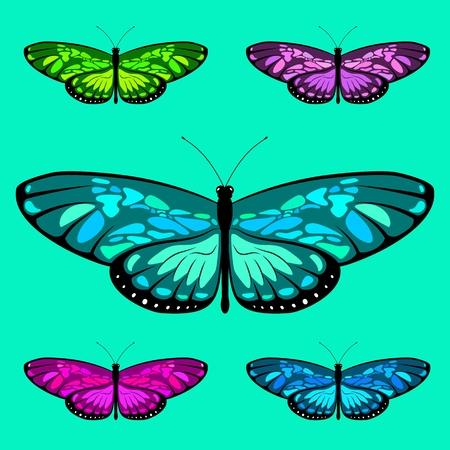 vector butterfly set 7