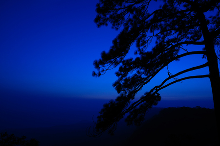 Silhouette of pine at Pha Mak Duk cliff in Phu Kradueng National Park, Loei, Thailand photo