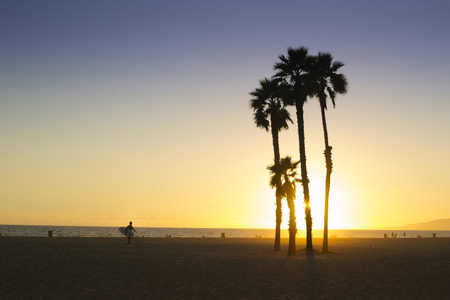 Silhouette of palm trees and surfer in a bright sunset on santa monica/venice beach