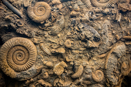 Detail of prehistoric fossils on a bottom of a sea Stock Photo