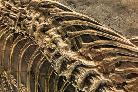 Detail of a prehistoric bone spine skeleton fossil with various joints from a prehistoric era Stock Photo