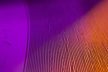 Close up macro detail on music vinyl grooves of a purple single 7 inch record played at 45 rpm