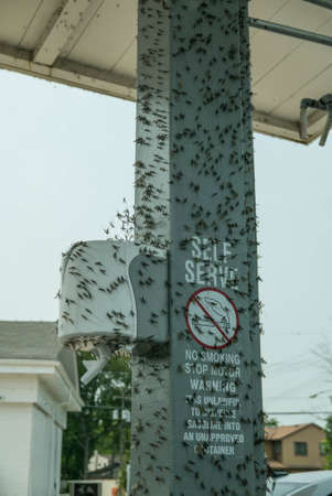 ephemera: Mayflies Fishflies Great Lakes Infested. Millions of fishflies, also known as mayflies The insects emerge from the great lakes and cover surfaces near the shores.