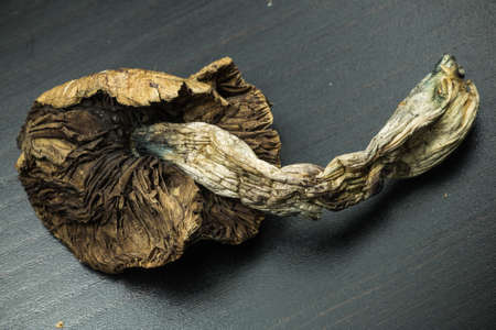 hallucinogen: Psilocybin Mushroom 4. Psilocybin mushroom, also known as Magic Mushroom, a psychedelic drug that causes hallucinations which has been used by humans for thousands of years.