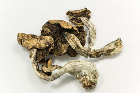 hallucinations: Magic Mushrooms 2. Psilocybin mushrooms, also known as Magic Mushrooms, a psychedelic drug that causes hallucinations which has been used by humans for thousands of years. Stock Photo