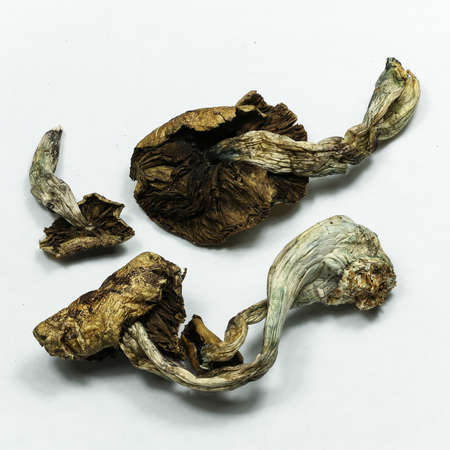 psychoactive: Magic Mushrooms 1. Psilocybin mushrooms, also known as Magic Mushrooms, a psychedelic drug that causes hallucinations which has been used by humans for thousands of years.