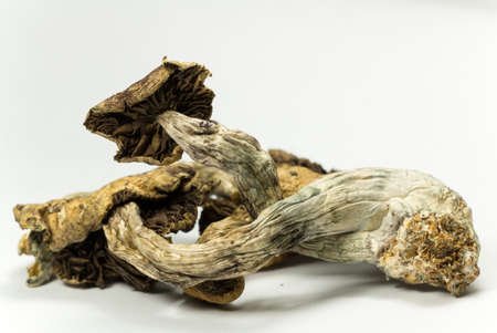 hallucinogen: Magic Mushrooms 6. Psilocybin mushrooms, also known as Magic Mushrooms, a psychedelic drug that causes hallucinations which has been used by humans for thousands of years. Stock Photo