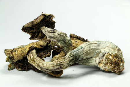 hallucinogen: Magic Mushrooms 5. Psilocybin mushrooms, also known as Magic Mushrooms, a psychedelic drug that causes hallucinations which has been used by humans for thousands of years. Stock Photo