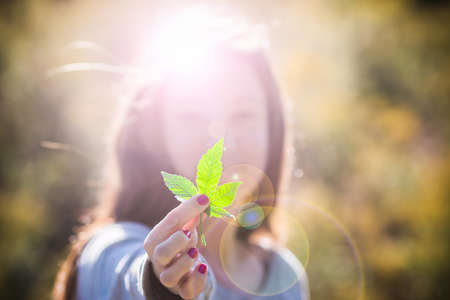 nature of sunlight: Girl Holding Marijuana Leaf. Pretty girl in outdoor late afternoon light holding a pot leaf, with lens flare. Stock Photo