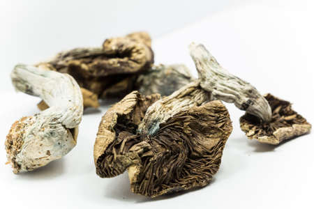 hallucinations: Magic Mushrooms 3. Psilocybin mushrooms, also known as Magic Mushrooms, a psychedelic drug that causes hallucinations which has been used by humans for thousands of years. Stock Photo