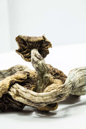 hallucinogen: Magic Mushrooms 4. Psilocybin mushrooms, also known as Magic Mushrooms, a psychedelic drug that causes hallucinations which has been used by humans for thousands of years.