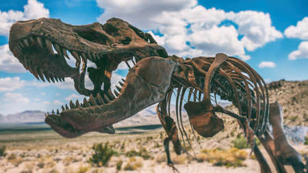 tyrannosaurus rex: Tyrannosaurus Rex Dinosaur Fossil Desert. A tyrannosaurus rex dinosaur fossil skull against a background of a desert. Stock Photo