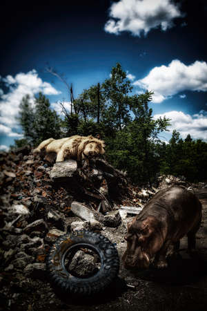 urban jungle: Lion and Hippo in Building Ruins. A lion and hippo in a surreal setting of urban decay.