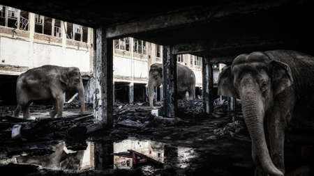 end times: Elephants in Abandoned Buildings. Elephants in a dark. abandoned factory building.