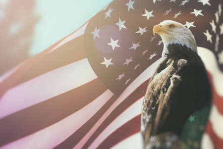 independance: American Bald Eagle Flag Patriotism. Bald Eagle, symbol of American freedom, perched in front of an American flag. United States of America patriotic symbols. Stock Photo