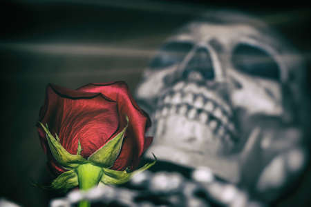 Rose and Skeleton. A red rose laid on a skeleton, death concept. Edited in vintage film style. Stock Photo