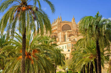 La Seu, the medieval gothic cathedral of Palma de Mallorca, in the palm tree garden, Spain Standard-Bild