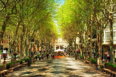 Born Boulevard in the shadow of plane trees, Palma de Mallorca, Spain, Europe 写真素材