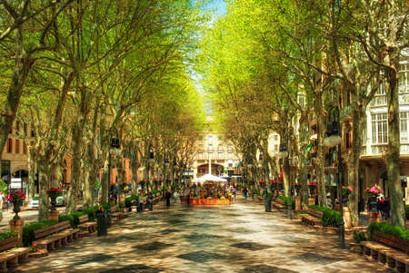 Born Boulevard in the shadow of plane trees, Palma de Mallorca, Spain, Europe Stock Photo