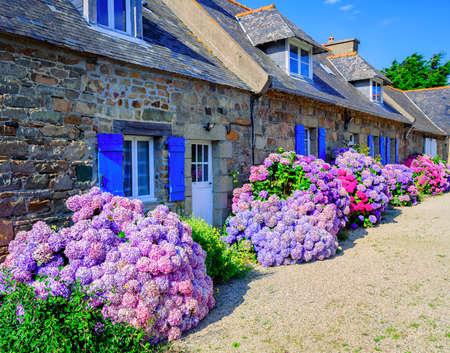 Kleurrijke Hortensia bloemen decoreren traditionele stenen huizen in een klein dorp, Bretagne, Frankrijk