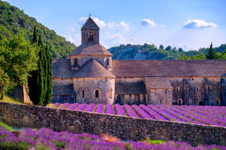blooming  purple: Blooming purple lavender fields at Senanque monastery, Provence, southern France