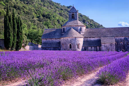abbey: Blooming purple lavender fields at Senanque monastery, Provence, southern France