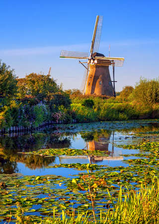 Windmill reflecting in a lake covered with water-lillies in Holland, Kinderdijk, Netherlands