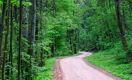 long way: Winding road through a dark green forest at day time