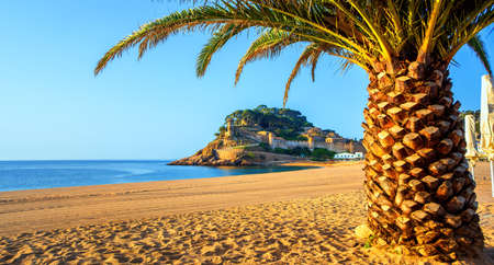 Tossa de Mar, panoramic view of the Platja Gran sand beach with palm tree and the historical walled Old Town (Vila Vella). Costa Brava, Catalonia, Spain.
