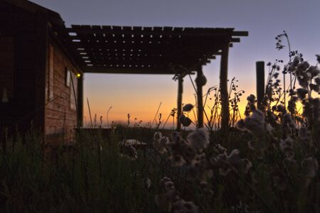 front house: Ranch house at sunset with soft plants in front.