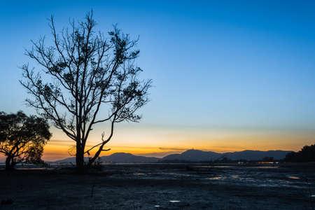 Mangrove trees and landscape sunset scene at Phuket Thailand. Taken on long exposure