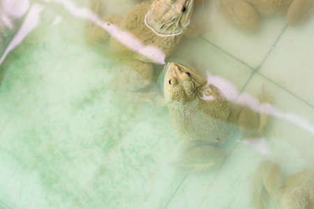 Group of frogs in the farm Stock Photo