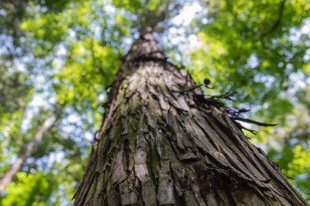 Low Angle Shot of Treebark, Narita Japan Stock Photo