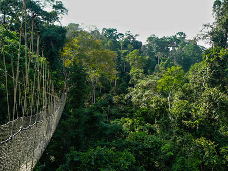 elevated walkway: A long elevated walkway high up in the canopy of the rainforest in Taman Negara National Park, Malaysia.