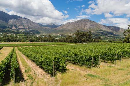 capetown: Winelands Franschhoek, Capetown, South Africa