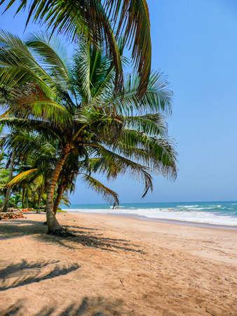 palmtree: Palmtree on remote tropical beach, Ghana , Africa