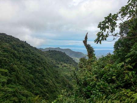 Monteverde Cloud forest photo