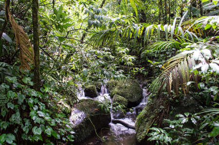 A Stream of Water runs through the lush foliage of a tropical rainforest in Costa Rica  photo
