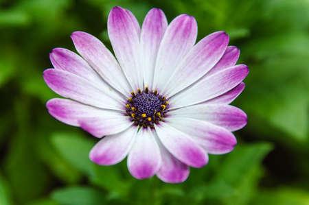 compositae: Asteraceae or Compositae