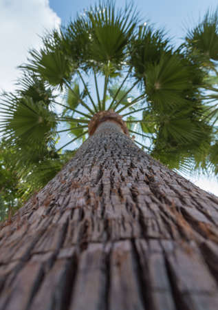 Low angle view of coconut palm tree photo