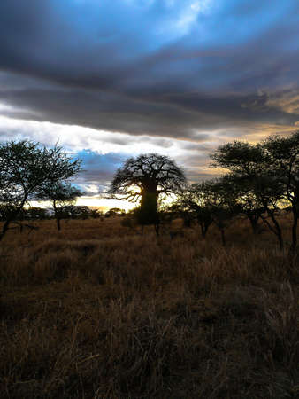 africa baobab tree: Cloudscape, Sunset with Baobab tree in the Serengeti National Park Tanzania, Africa