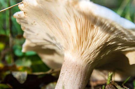 the underside of a mushroom photo