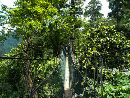 elevated walkway: Rope walkway through the treetops in a rain forest in Ghana Stock Photo