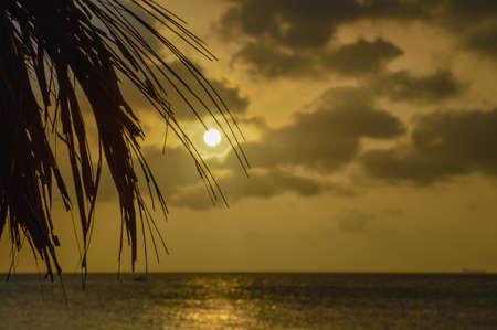 palmtree: Sunset and Palmtree leaf