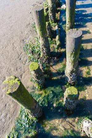 coastal feature: Coastal Feature on Dutch Mud Flats Stock Photo