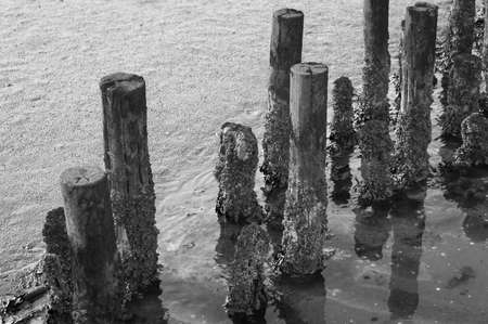 coastal feature: Black and White Coastal feature on dutch mud flats