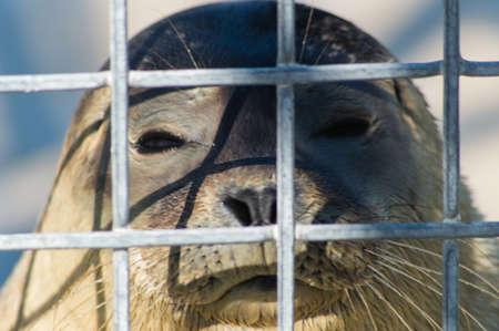 Sealpup Behind Bars photo
