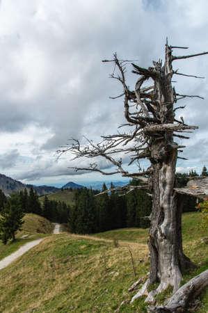 latitude: High latitude dead tree.