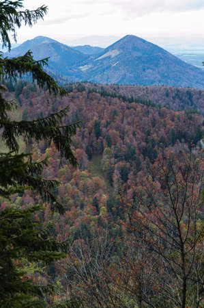 osttirol: Larch tree forest with mountains in the alps Stock Photo